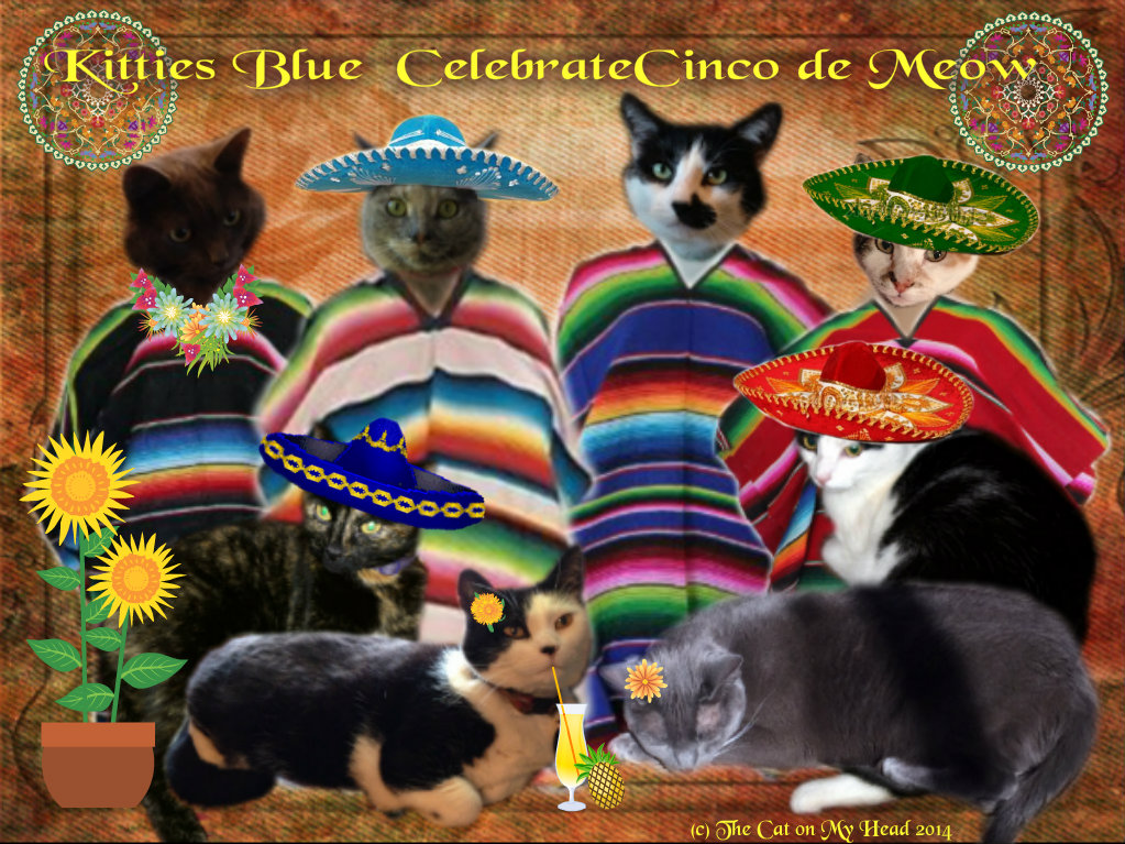 Image result for cinco de mayo with cats