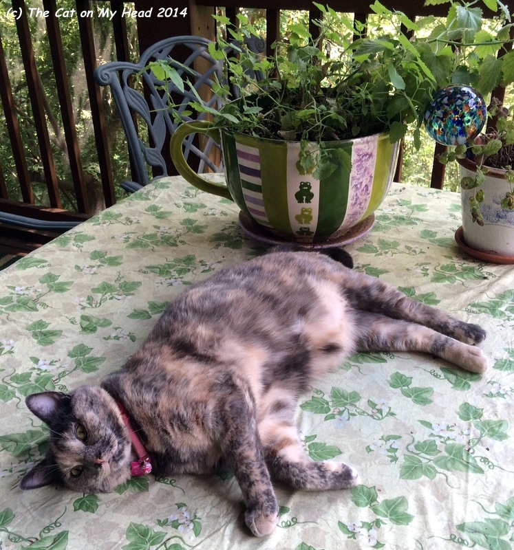 http://thecatonmyhead.com/tortie-tuesday-summertime/