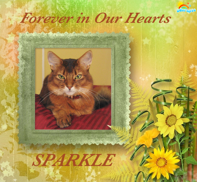 remembering sparkle