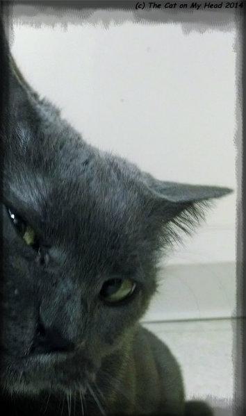 swizzle selfie peek-a-boo