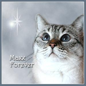Maxx, Forever