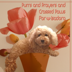 Purrs-Prayers-Crossed-Paws-for-Isadora