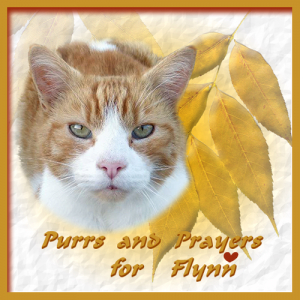 Purrs-and-Prayers-for-Flynn