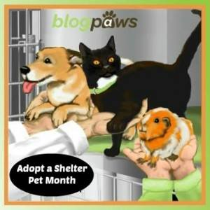 adopt-a-shelter-pet-month