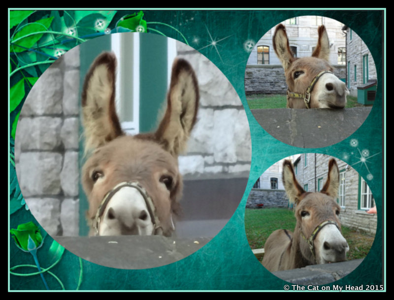 Canadian Donkey does Sunday Selfies