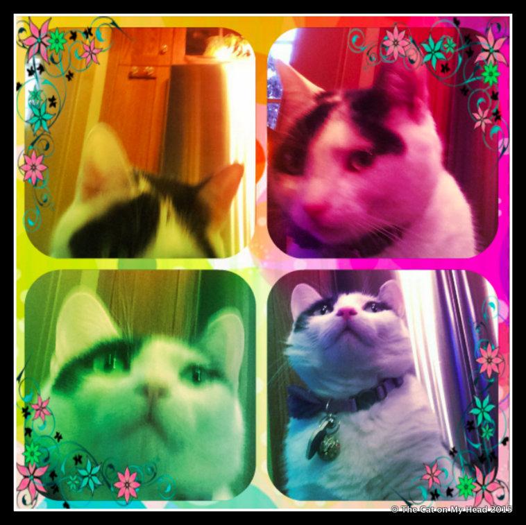 Lisbeth's Rainbow selfies