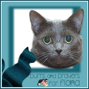 Thank you & Purrs and Prayers for FIONA Badge
