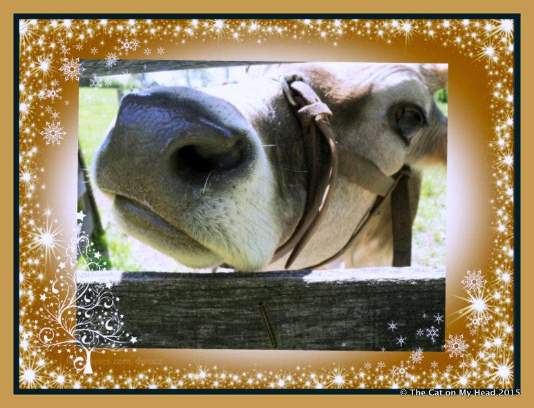 Mooey Christmas Selfie