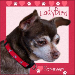 ladybird-forever