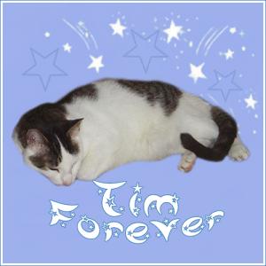 Tim-FOREVER