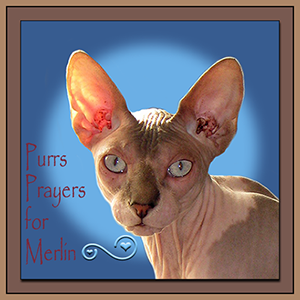 purrs-and-prayers-for-merlin-badge