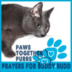 PurrsPrayers-for-BuddyBudd