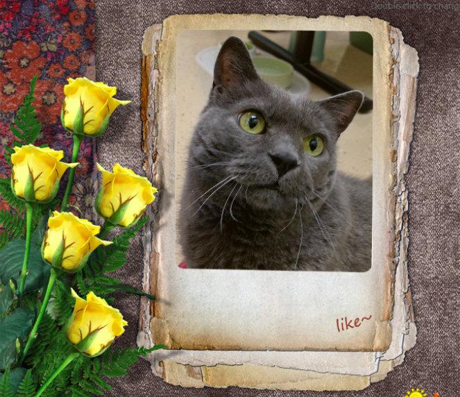 PAWS cat Swizzle