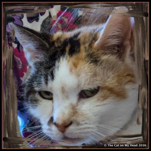 Lily Olivia has catitude.