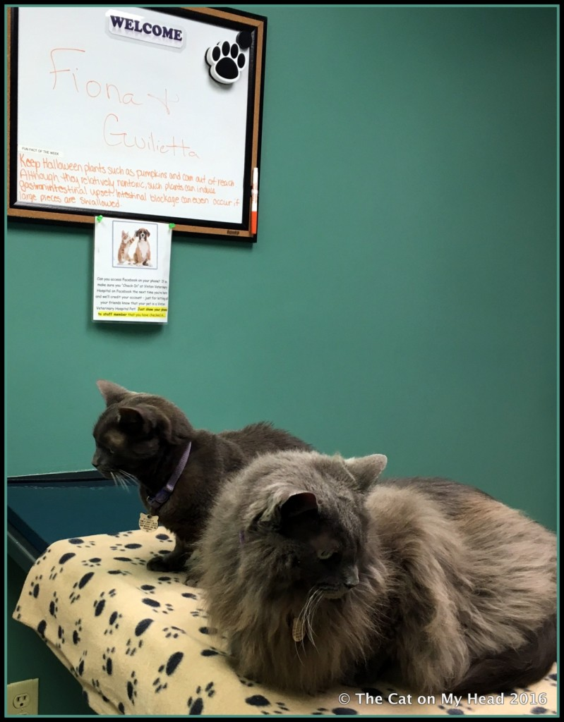 Fiona and Giulietta at the vet.