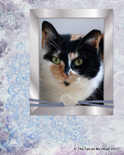 Guest host: calico Charlotte