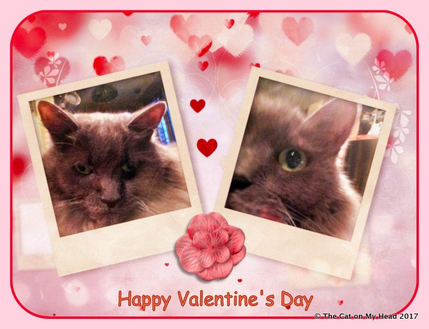 Giulietta's Valentine Selfie