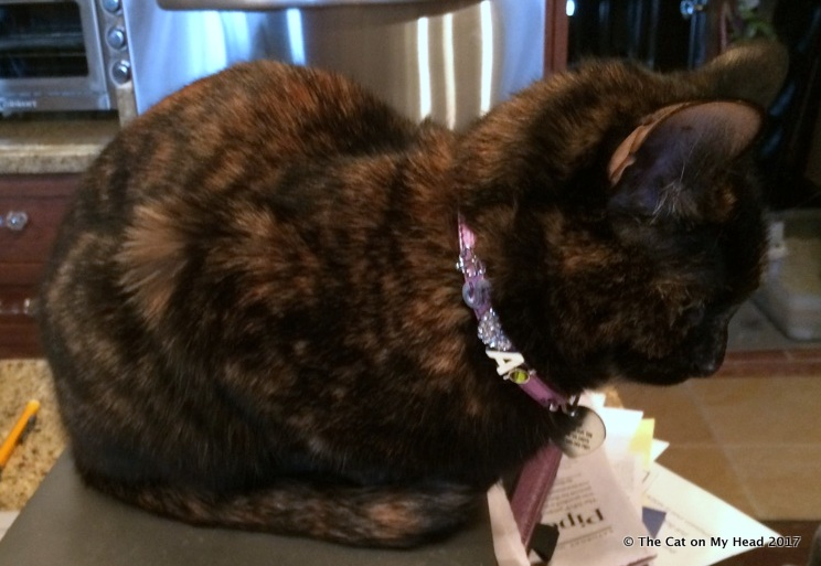 Astrid shows off collar charms