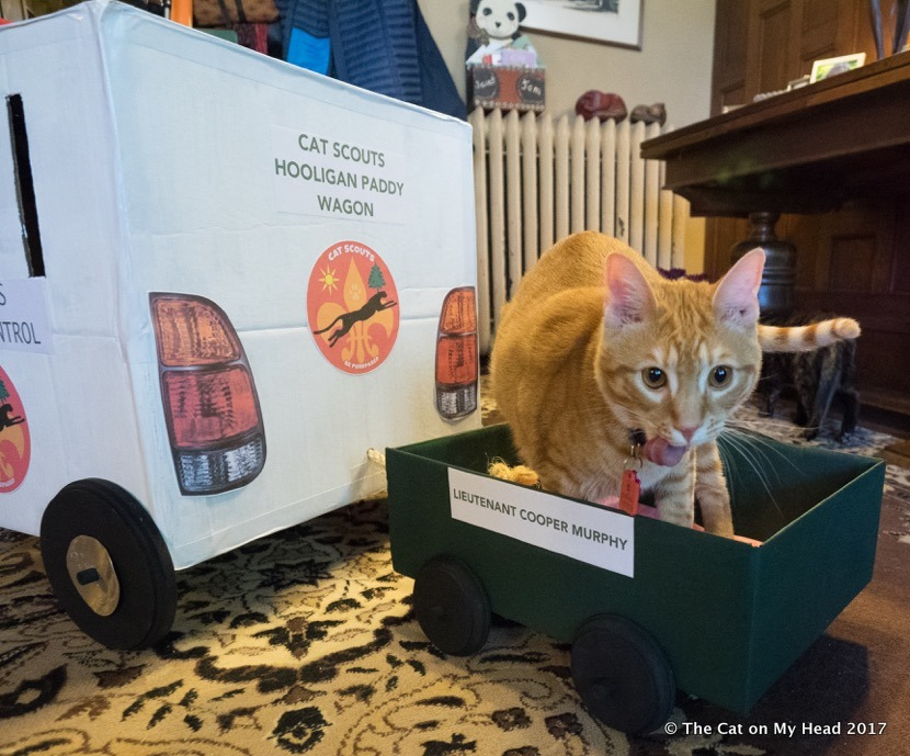 Cat Scouts Hooligan Paddy Wagon
