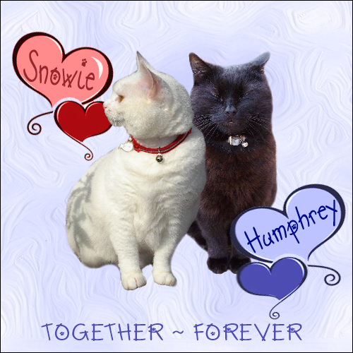 Angel Snowie and Angel Humphrey, FOREVER