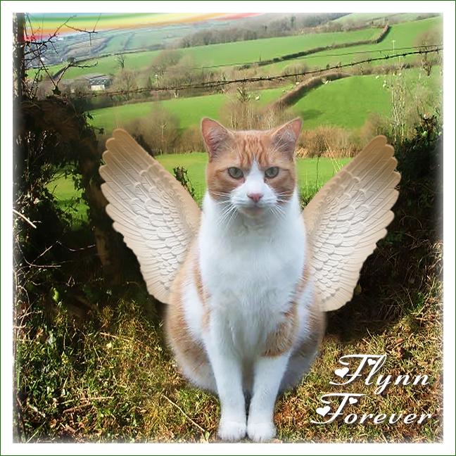 Flynn's angel selfie