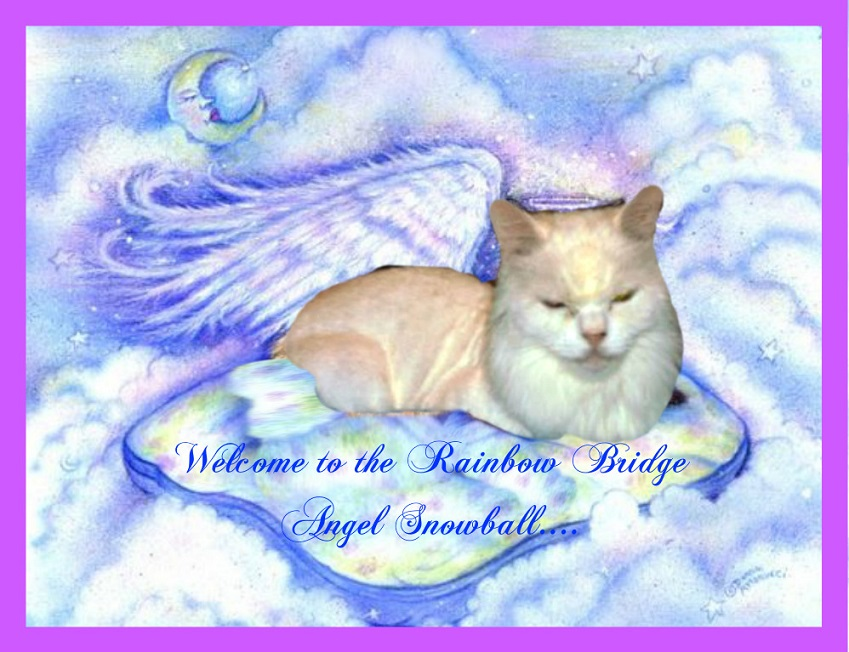 The beautiful new angel, Snowball, is the true star today.