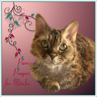 Purrs, prayers and POTP for Mitalee.