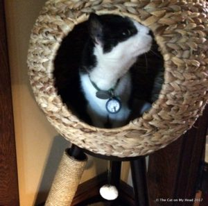Mau is second of the kitties to investigate the tower sphere.