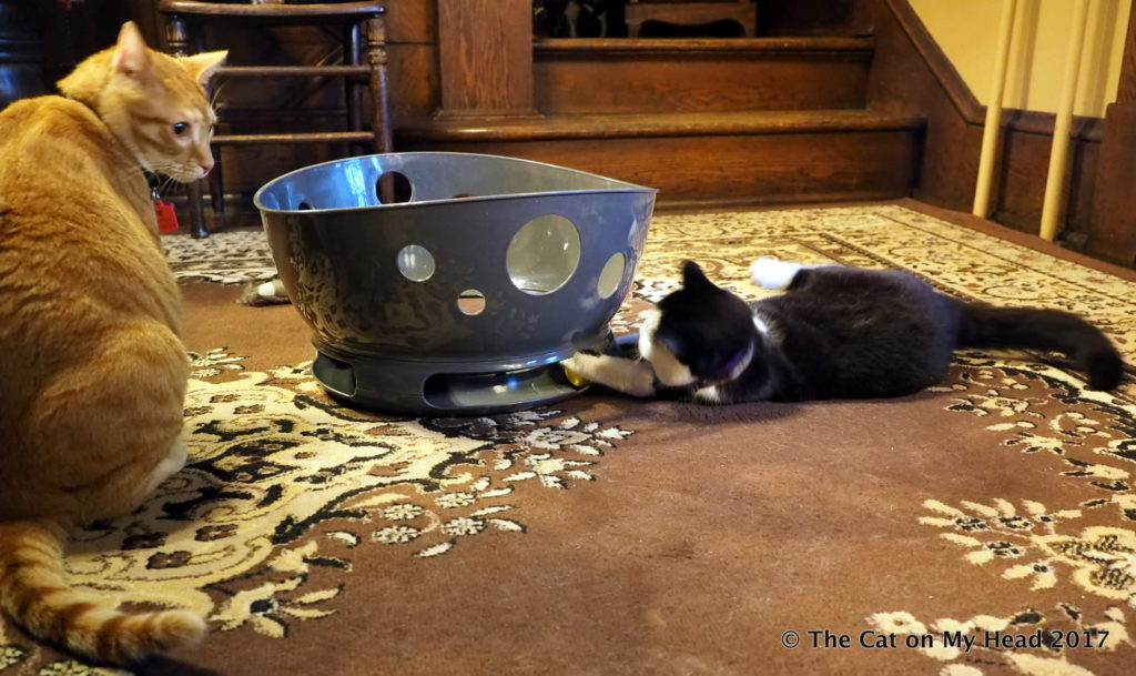 Kitties blue test and review the jackson galaxy space for Jackson galaxy cat toys
