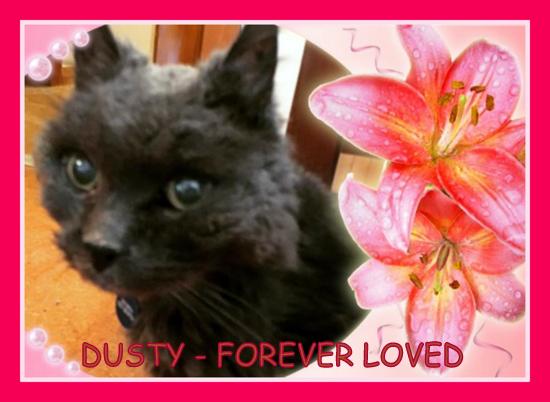 Remembering Dusty