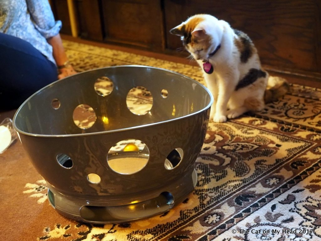 Kitties blue test and review the jackson galaxy space for Jackson galaxy petsmart