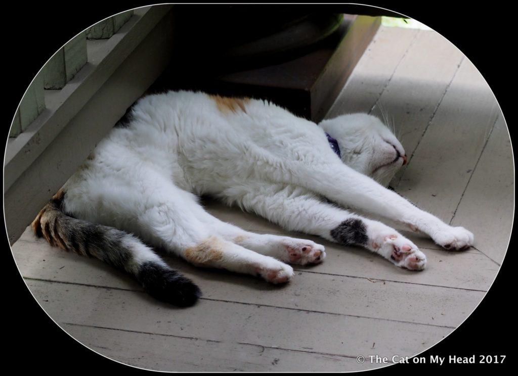 Lily Olivia - summer position.