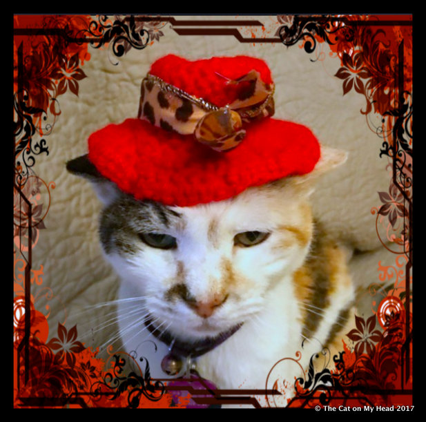 Lily Olivia models her Crotchety Cougars red hat for Sunday Selfies.