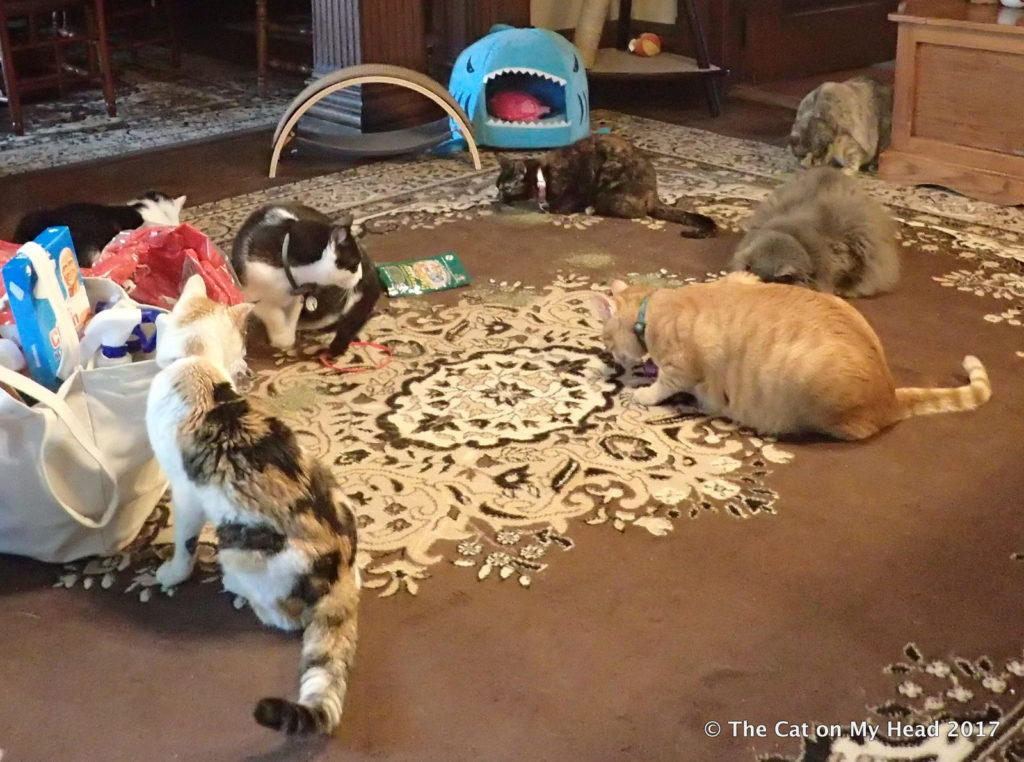 The only time you'll see us all in one room is when Chris is distributing treats and nip.
