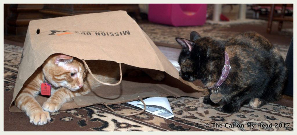 Cooper Murphy and Astrid have fun in paper bag.