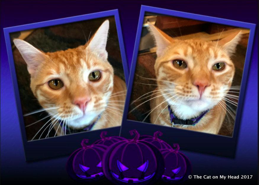 CoSrroper Murphy's pre-Halloween selfies.