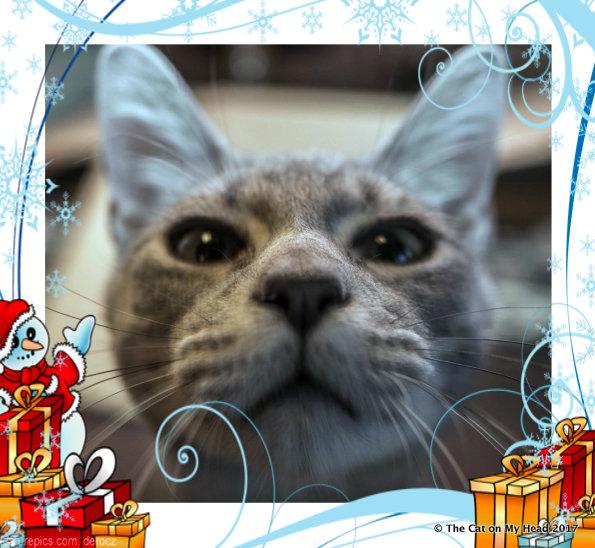 Sawyer's Christmas-themed selfie.