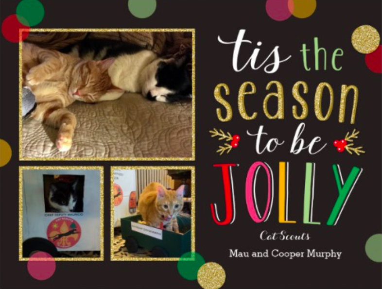Cooper Murphy and Mauricio's Cat Scout Christmas card.