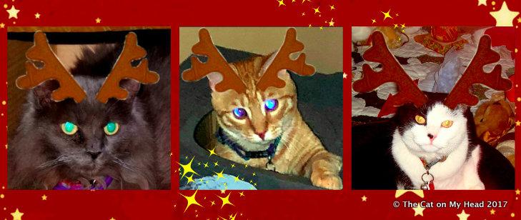 Kitties Blue Save Christmas