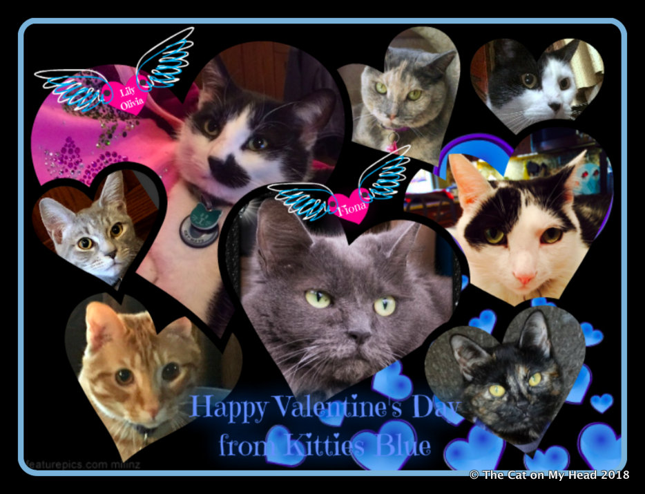 Valentine's Day Wishes from Kitties Blue