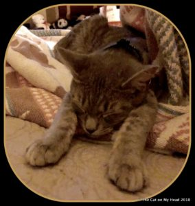 Sleeping kitten art original.