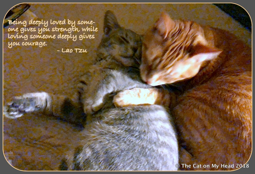 A Spark of Love from Tabby cats.