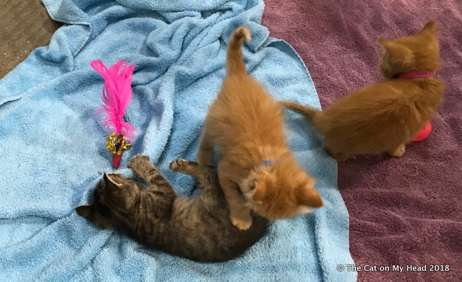 Kittens at BlogPaws.