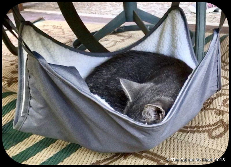 Sawyer found the Happy Hammock purrfect for an afternoon snooze.