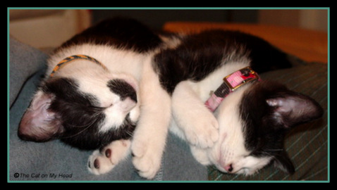 Friendship Friday - Mau and Misty May kittens