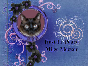 Meezer Tails - Rainbow Bridge