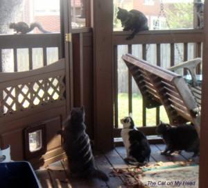 Kitties keep their eyes on a squirrel. Railing (L to R): Astrid, Calista. Deck (L to R): Giulietta, Lisbeth & Fiona