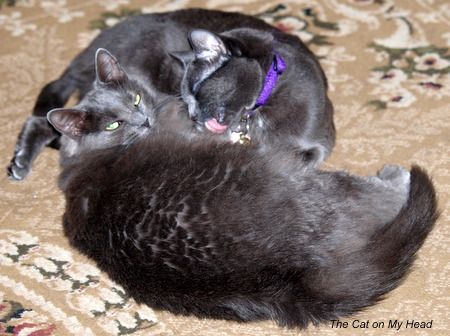 Fiona gives sis, Giulietta, a bath as they cuddle.