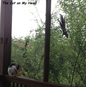 At first Lisbeth didn't even know the squirrel was there.