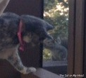 Calista Jo tries to sweet talk the squirrel into joining the pawty goers inside the catio.